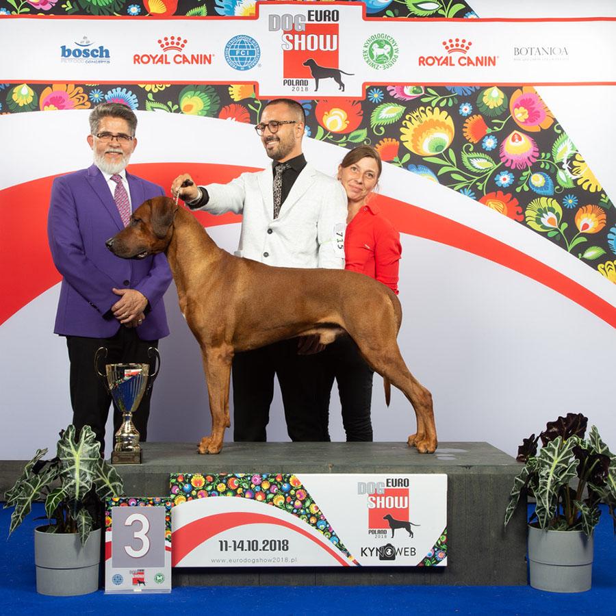 Rhodesian Ridgeback Harmakhis Wisdom Lion Dog Sara Venturelli Cani ENCI Cresta Word Dog Champion European Dog Champion